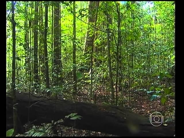 Globo Repórter - Amazônia Secreta (Parte 1)