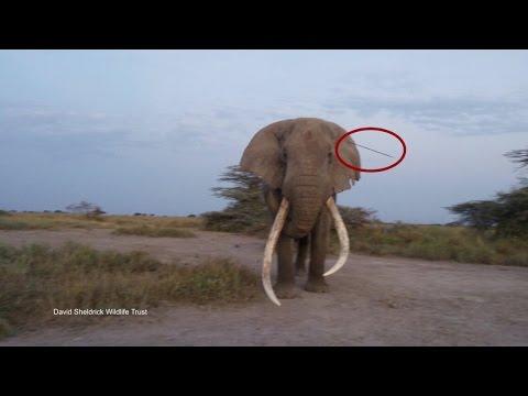 Incredible Tale of Elephant Wisdom