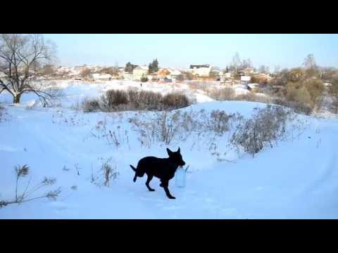 видео: Бомон Росс Евразия.  ...Как по воду я ходила.