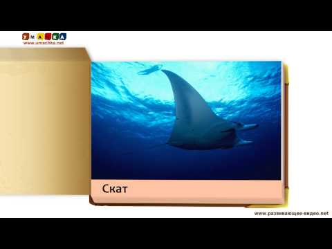 Презентація для дітей від 1 року 'Мешканці води'