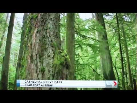 Global News BC - Cathedral Grove & the NDP on Forestry