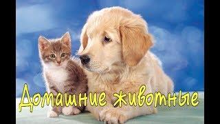 ДОМАШНИЕ ЖИВОТНЫЕ Развивающее видео для детей 1 -3 года Russian words for kids. Animals