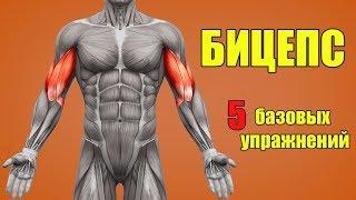 видео Эффективные упражнения на бицепс