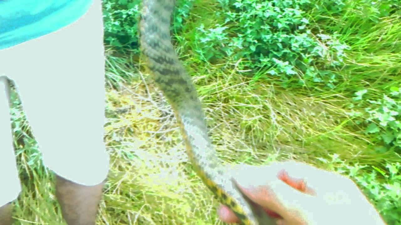 фото зелёные змеи