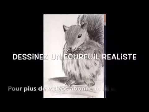 Dessinez Un Ecureuil Realiste Drawing Squirrel Youtube