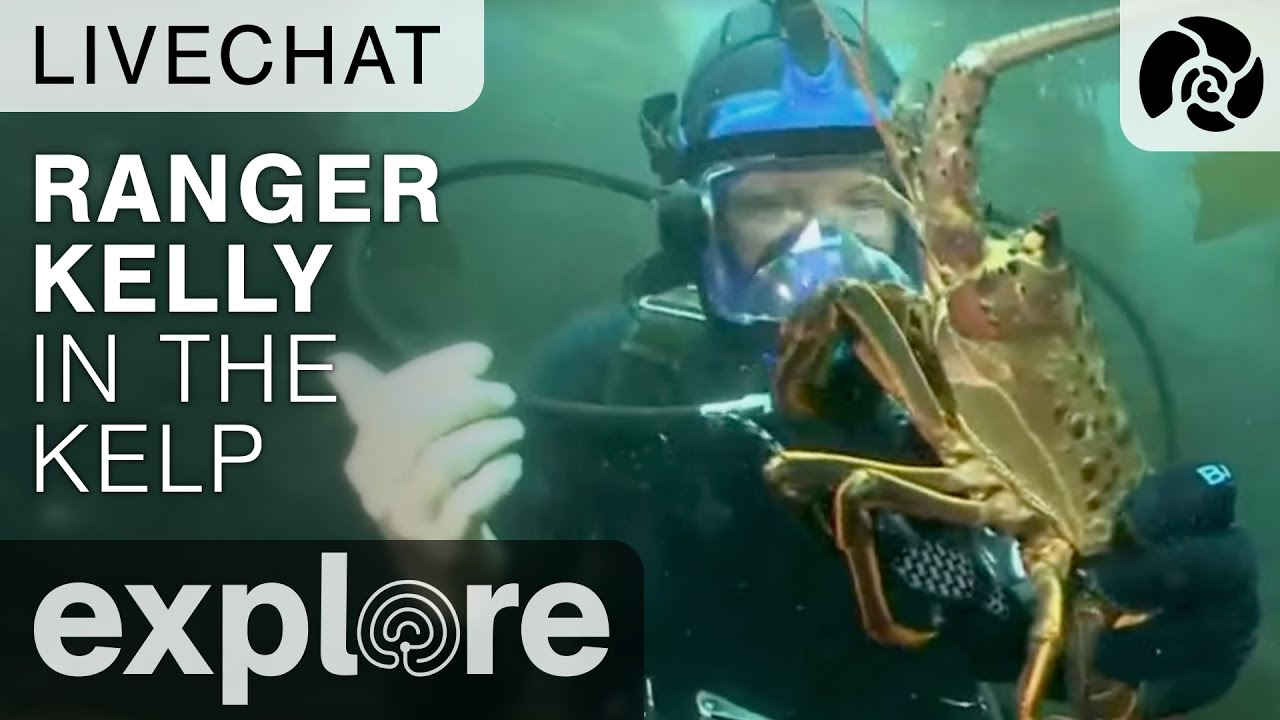Ranger Kelly In The Kelp Scuba Diving - Underwater Live Chat