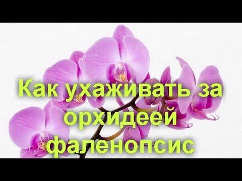 Орхидея: сколько цветет в домашних условиях, что делать