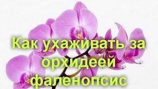 Как ухаживать за орхидеей фаленопсис(Как ухаживать за орхидеей фаленопсис Фаленопсис - самая распространенная орхидея в комнатном цветоводстве..., 2016-06-06T09:45:58.000Z)