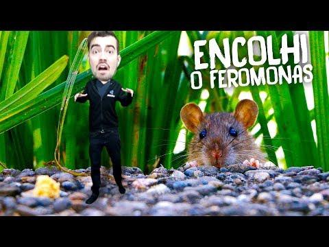 QUERIDA, ENCOLHI O FEROMONAS!