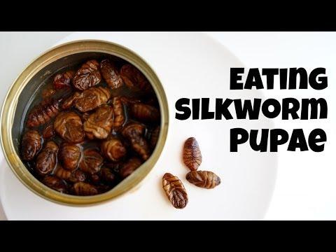 Emmy Eats Silkworm Pupae