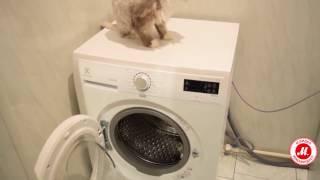 Огляд пральної машини Electrolux EWF1076GDW від покупця «М. Відео»