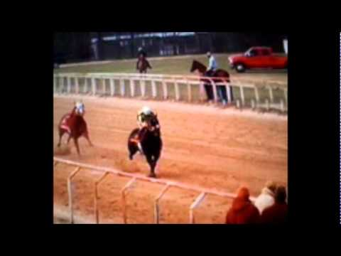 Carreras De Caballos En Murchison Tx Youtube