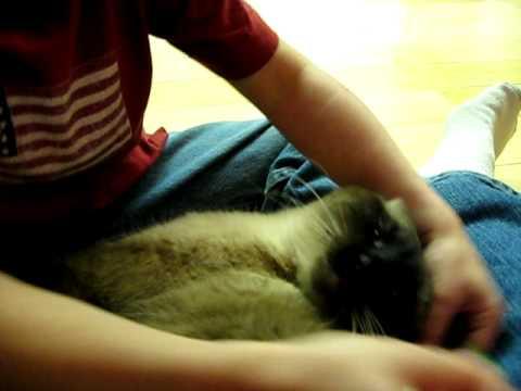 Magnet whisker kitty