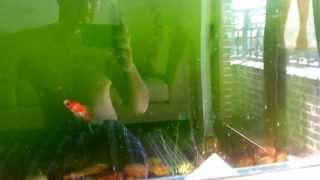 Aquarium UV Filter in action!