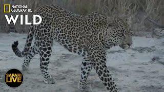 Safari Live - Day 367 | Nat Geo Wild