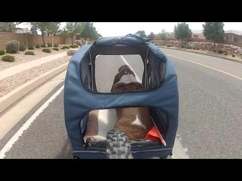 Pearl S Bike Ride In New Houndabout Ii Trailer Youtube