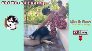 Cute And Funny Dog Videos   Cute Dog Costumes For Big Dogs   Cute Dogs And Cats