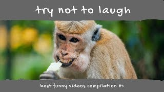 TRY NOT TO LAUGH / Best Funny Video Compilation #1 / Best Funny Video