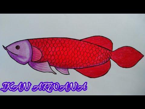 Sketsa Gambar Ikan Buntal Gambar Ikan Hd