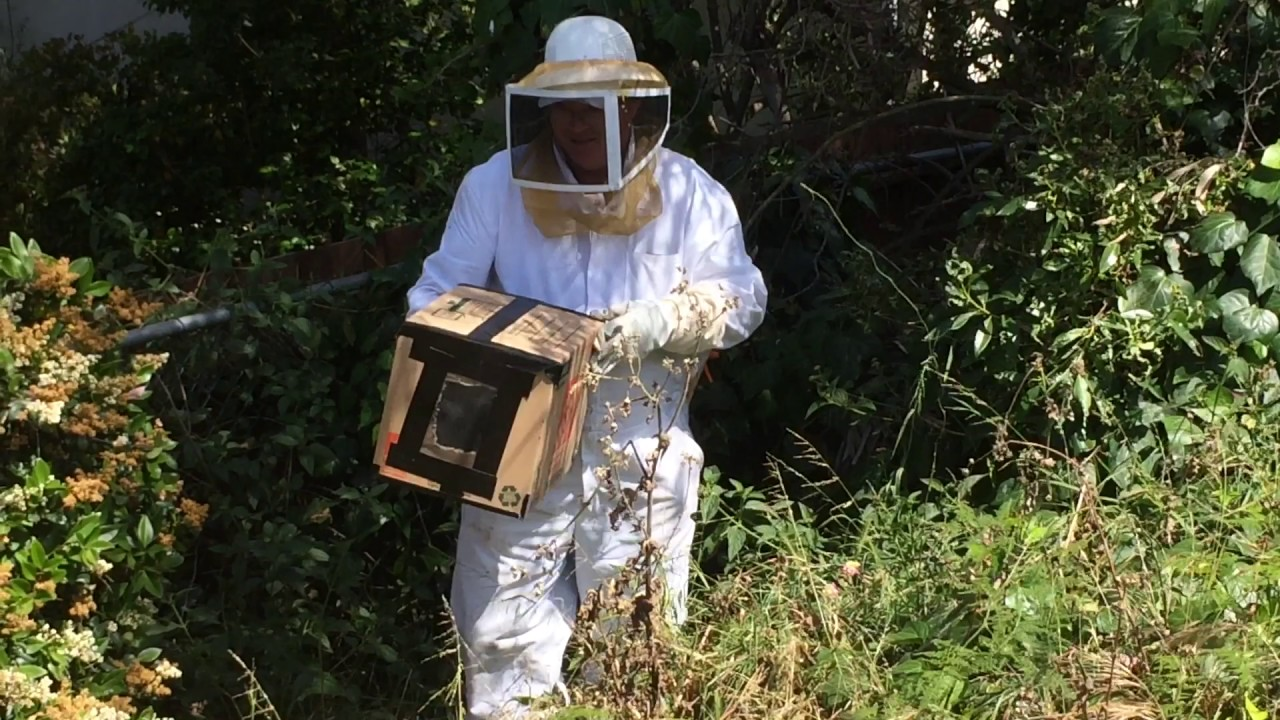 how to remove bees from your yard youtube