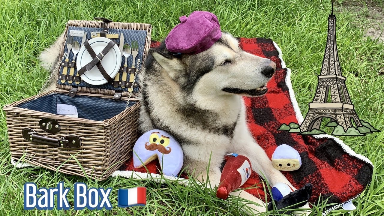 malamute and yorkie unbox June bark box | Frenchie Paris