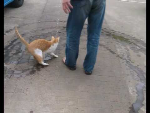 水を追いかける猫2