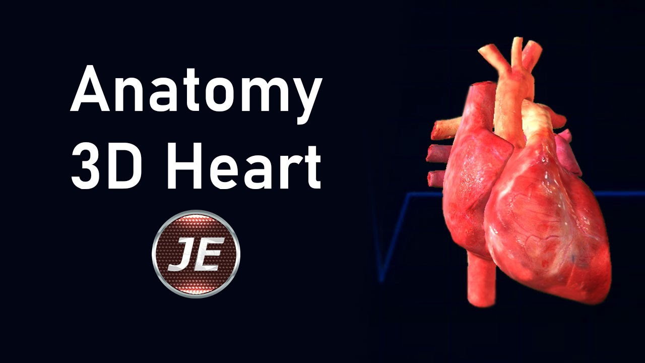 Anatomy of the Heart - External Structures - YouTube