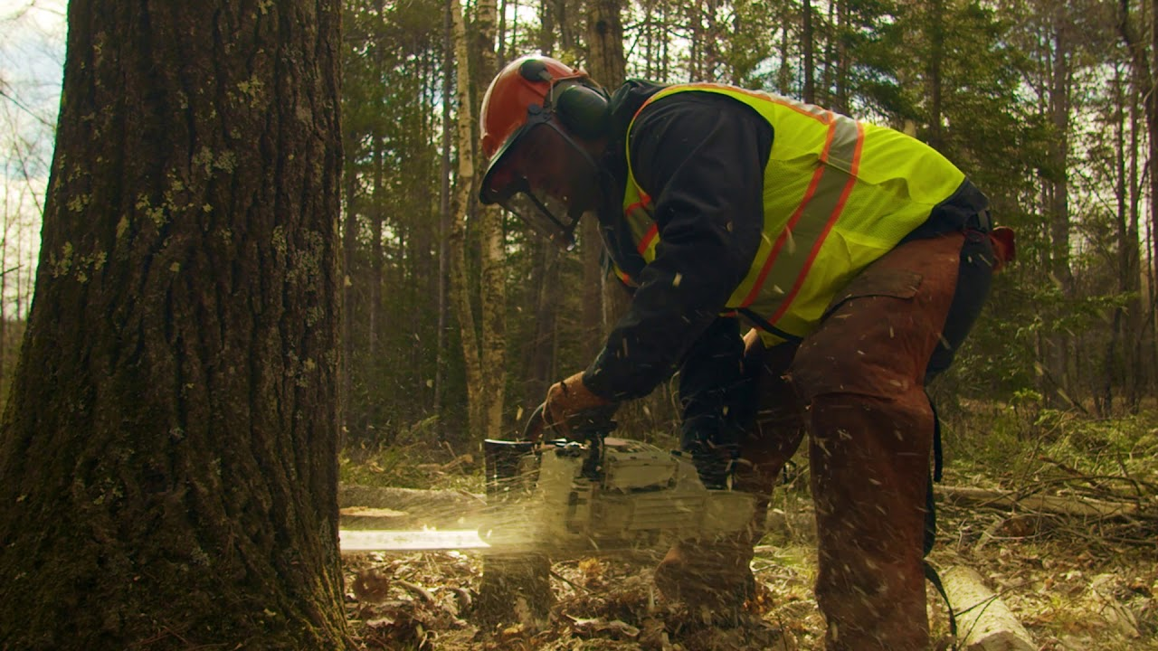 Sustainable Forests: The Humble Logger's Way of Life