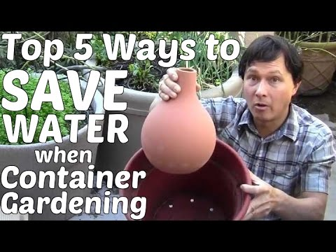 Top 5 Ways To Save Water When Container Gardening