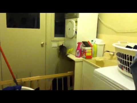 Best Cat Fail On The Internet!! (Original)