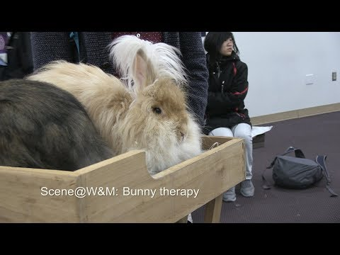 Scene@W&M: Bunny therapy