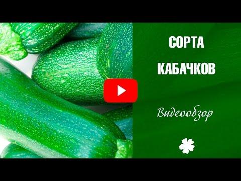 Сорта кабачков ✅ Цуккини и патиссоны ✅ Особенности выращивания