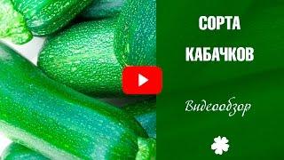 видео Выращивание кабачков: посадка, уход, особенности