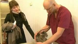 Ветеринарная клиника Динго. Кастрация кота