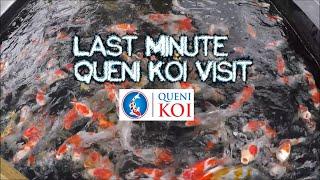 Quick Koi Fix - Last Minute Queni Koi Visit