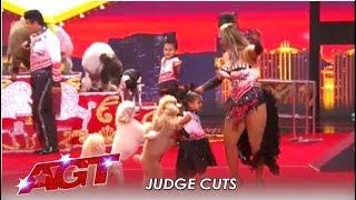 Dominguez Poodles: Simon's Favorite Dog Act Ends In CHAOS!   America's Got Talent 2019