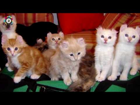 Smallest Cats & Cat Breeds in the World