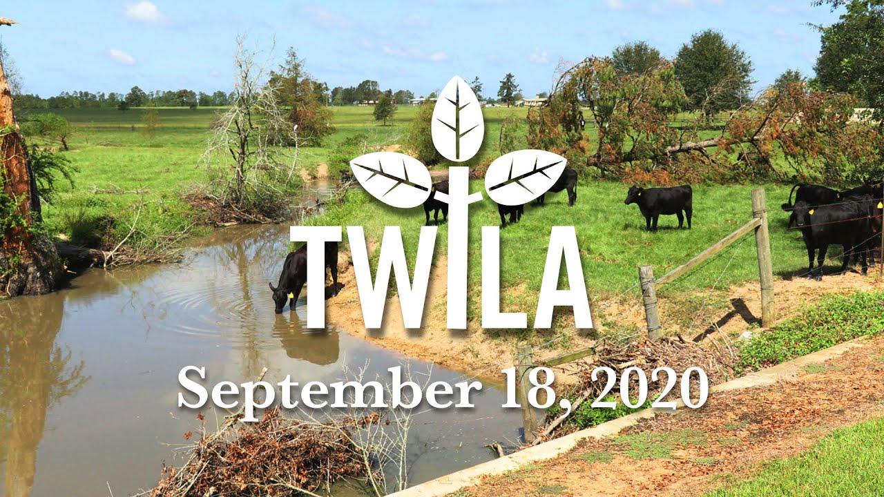 TWILA -- September 19, 2020