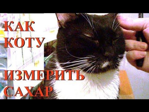 Как взять кровь у кота для глюкометра