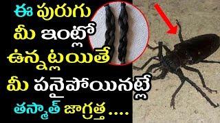 పేరు లేని పురుగు దేశాన్ని వణికిస్తోంది |Shocking Incident Of Mysterious Insect Chopping Women Hair