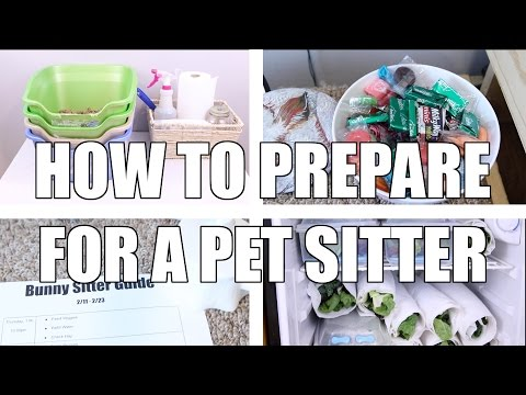 How to Prepare For a Pet Sitter