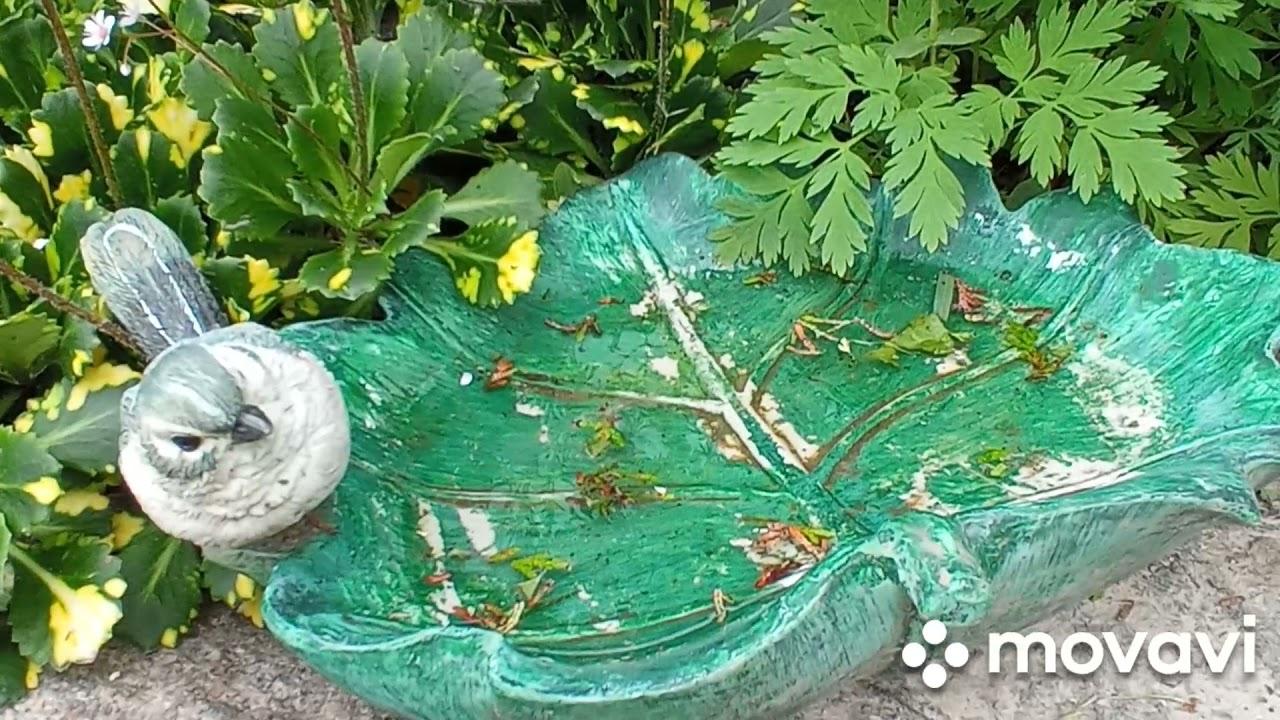 Идея для сада! Маленькая клумба с необыкновенной камнеломкой !