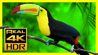 Breathtaking Colors of Nature in 4K HDR 🐦 Amazing Nature & Sleep Relax Music, 4K OLED TV Screensaver