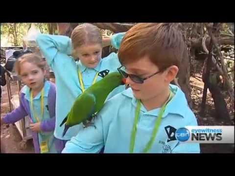 Diabetes kids camps - 10 News Melbourne