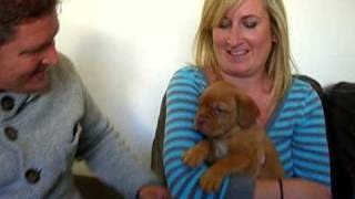 Eden, Kc Miccah Sunrise, A Dogue De Bordeaux Pup With Her Family!
