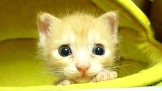 Симпатичные котята! Подборка - Новое HD Видео