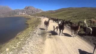 Impresionante ruta Casapalca - Marcapomacocha - Canta - Lima, full pedal con los Locos Madrugones