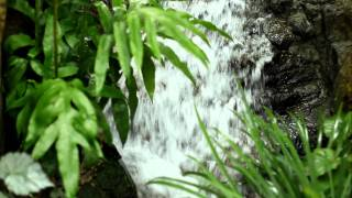 Canon EOS 1D Mark IV 影片拍攝測試