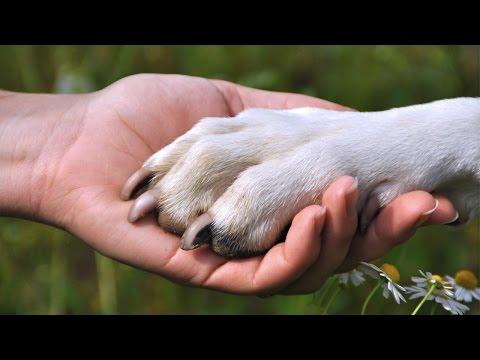 10 Chú Chó Trung Thành Nhất Trên Thế Giới