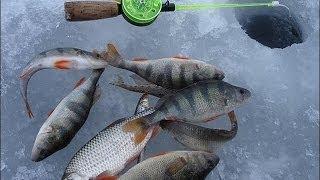 Видео зимняя рыбалка бесплатно Зимняя рыбалка смотреть Зимняя ловля рыбы видео Секреты зимней ловли